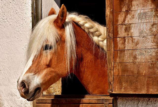 horse braid