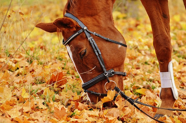 horse in fall